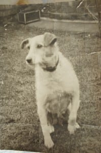 Judy was part of the family. Fox terrier mongrel. Always on verge of motherhood, as can be seen here